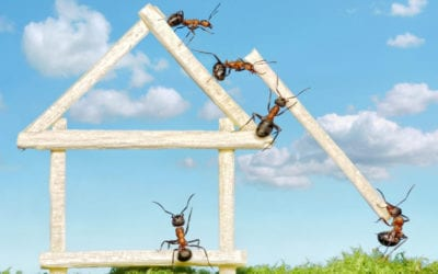 Pest Control In Maine: 5 Common Household Pests You Need to Watch Out for