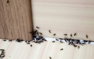 What's the Difference Between a Pest Control Expert and an Exterminator?
