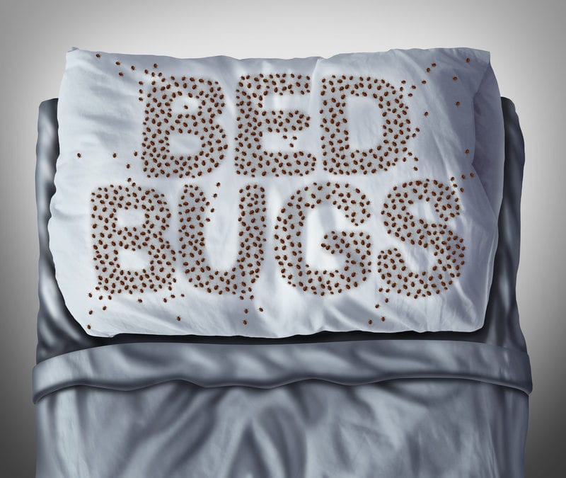 Dealing with Bed Bugs in Maine? Here is How to Identify and Treat Them