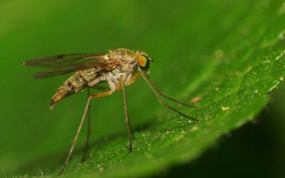 How To Protect Yourself And Your Property During Mosquito Season In Maine