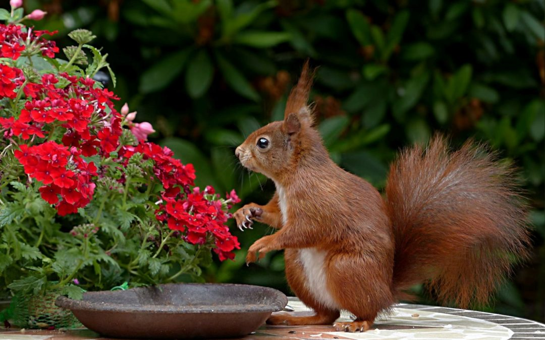 Ways to get rid of squirrels and groundhogs. Pest Control.