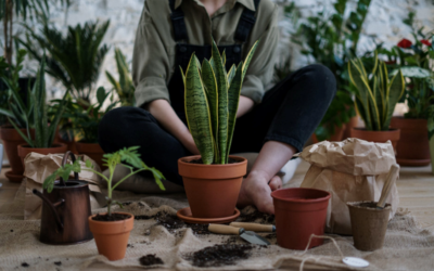 Maine Autumn Plants to Keep Pests Away from Your Home