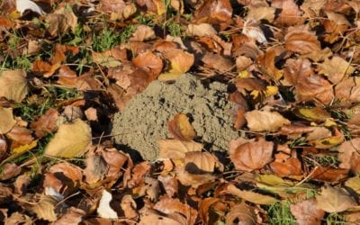 5 Tips to Keep Bugs From Moving Into Your Home This Fall