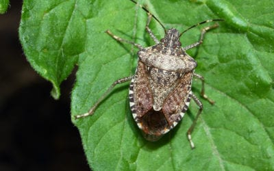 Stink Bugs, Fall Leaves, and Pumpkins: Signs of Fall