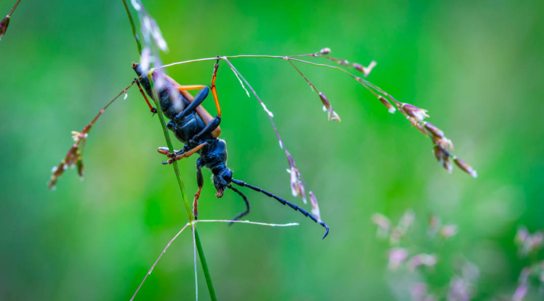 Why Is Prepping Your Lawn for Pests Important for Late Fall Early Winter?