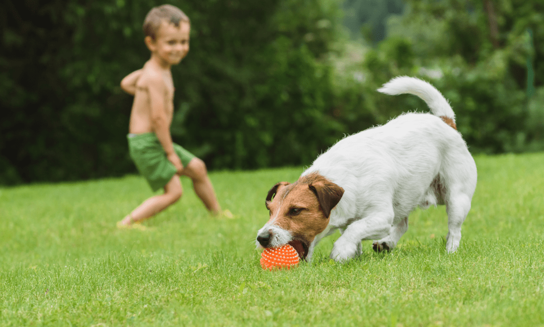 Young boy playing with his dog in their backyard during summer in Maine
