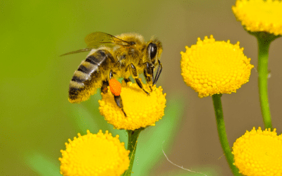 Bees and Stinging Insects Causing You Pain?