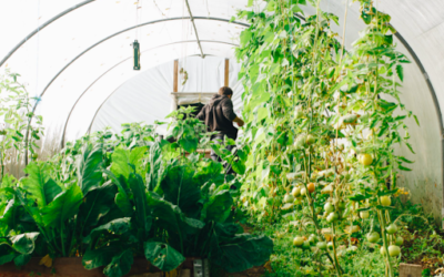 Tips to Protecting Your Vegetable Garden from Pests