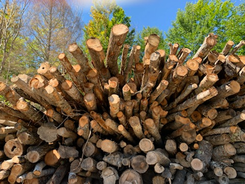 5 Reasons Why Smart Mainers Always Use Seasoned Firewood for Home Heating