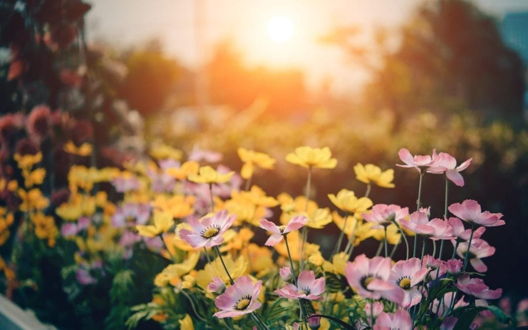 6 Affordable Ways to Transform Your Garden Space